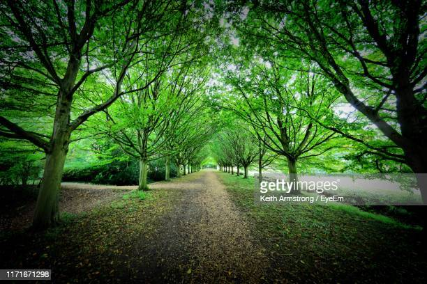 footpath amidst trees in forest - cambridge stock pictures, royalty-free photos & images