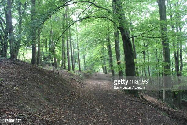 footpath amidst trees in forest - barry wood stock pictures, royalty-free photos & images