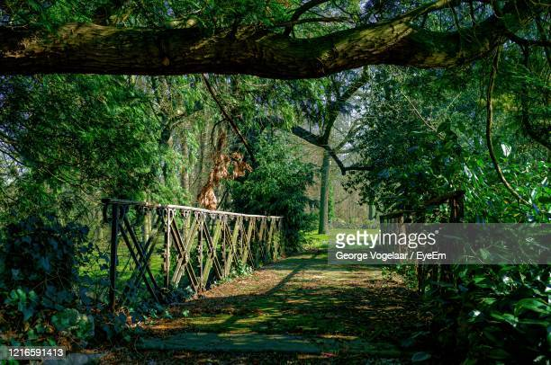 footpath amidst trees in forest - オランダ リンブルフ州 ストックフォトと画像