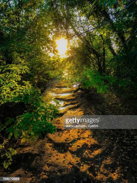 footpath amidst trees in forest - wichita stock photos and pictures