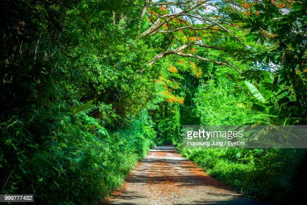 footpath amidst trees in forest - saipan stock pictures, royalty-free photos & images