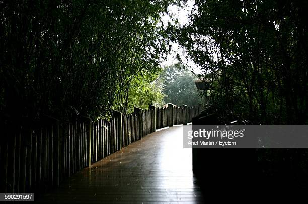 Footpath Amidst Trees In Garden