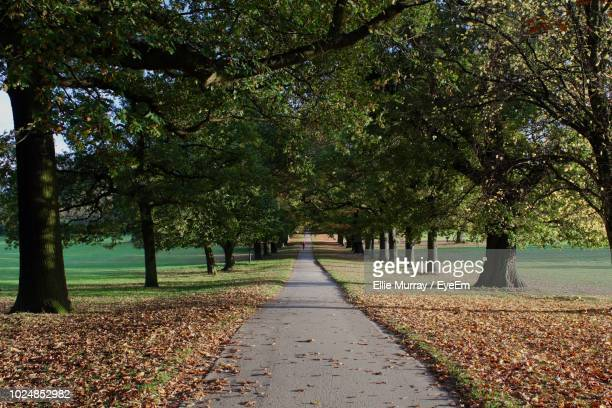footpath amidst trees in park during autumn - nottingham stock pictures, royalty-free photos & images