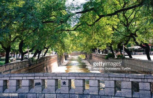 footpath amidst trees in park - cordoba argentina stock pictures, royalty-free photos & images