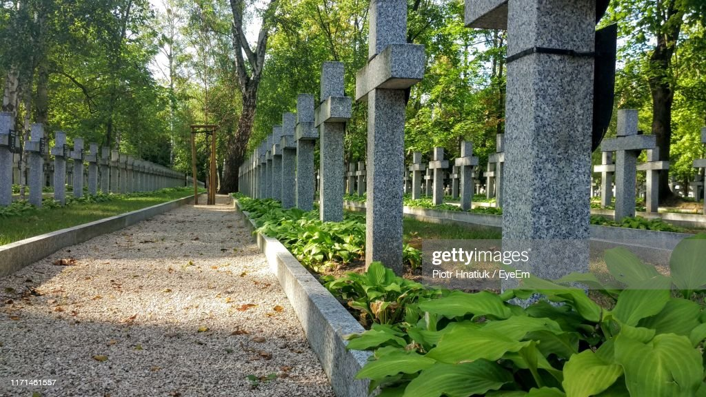 Footpath Amidst Trees In Park : Stock Photo