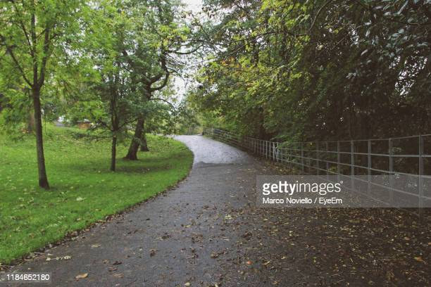 footpath amidst trees in park - glasgow green stock pictures, royalty-free photos & images