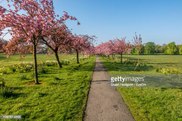 footpath amidst trees on field against sky - fruit tree stock pictures, royalty-free photos & images