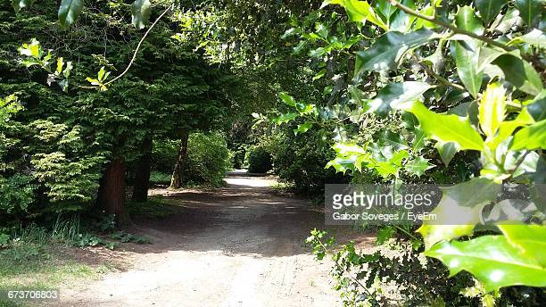 footpath amidst trees on field during sunny day - arboreto foto e immagini stock