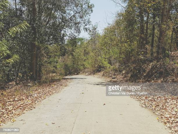footpath amidst trees - negros oriental stock pictures, royalty-free photos & images