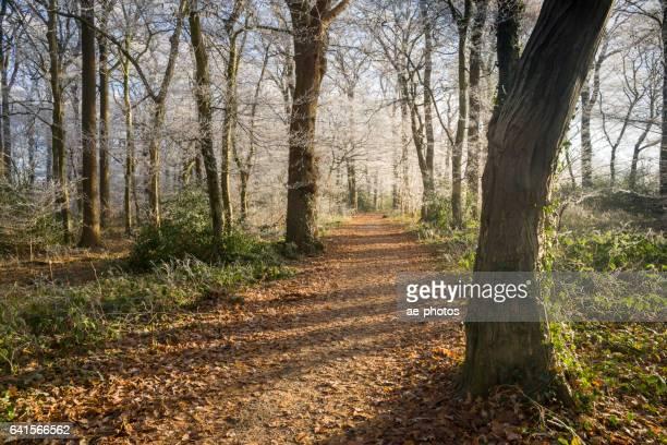 Sentier et congelé des arbres dans la forêt
