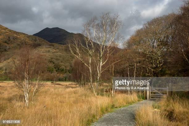 Footpath beside Llyn Dinas, Snowdonia national park, Wales