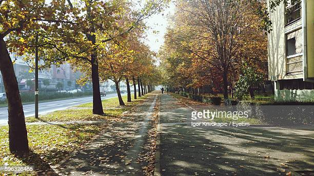 Footpath By Autumn Trees In City