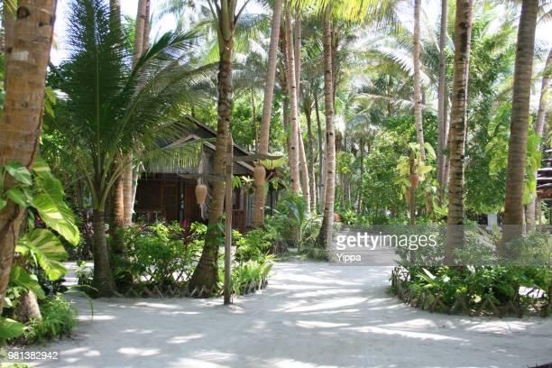 footpath by coconut palm tree in a tropical island - lugar turístico fotografías e imágenes de stock
