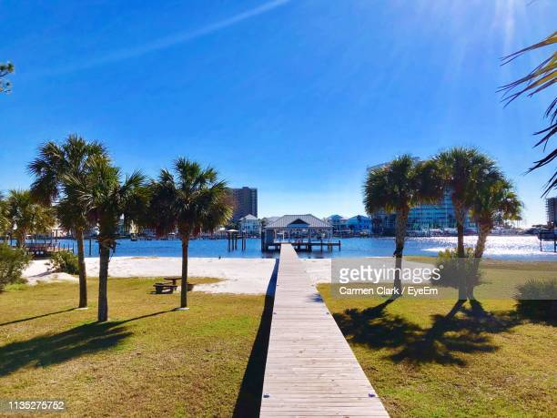 footpath by palm trees on beach against blue sky - gulf coast states stock pictures, royalty-free photos & images