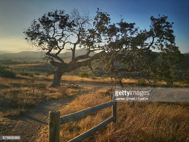 footpath by tree on grassy field against sky - james oneill stock photos and pictures