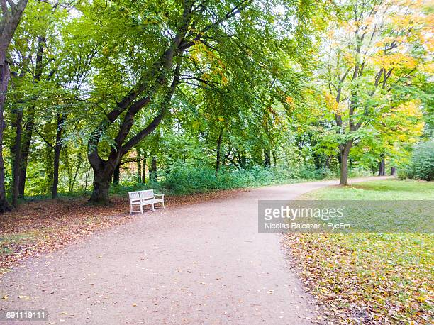 Footpath By Trees At Park