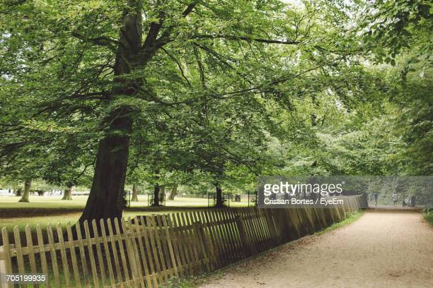 footpath by trees at park - bortes stock-fotos und bilder