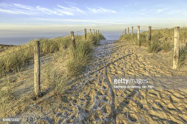 footpath from the dunes leading to the beach with north sea view - hollande méridionale photos et images de collection