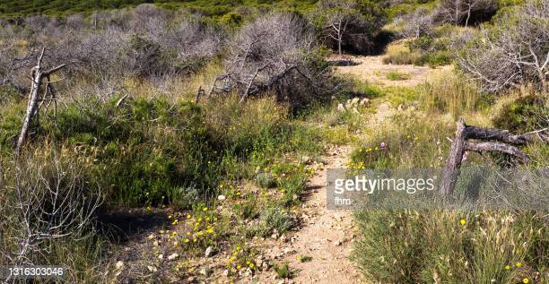 footpath in a dry landscape - spanien stock pictures, royalty-free photos & images