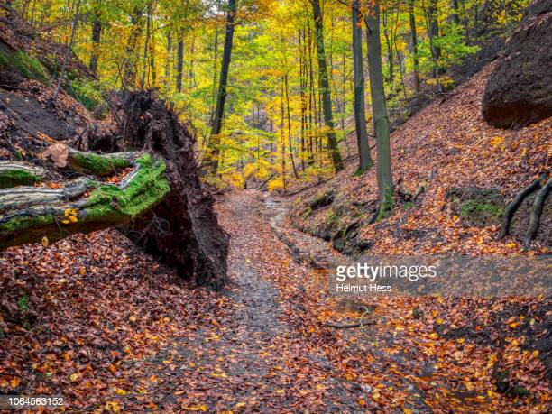 footpath in a gorge with autumnal trees - アイゼナッハ ストックフォトと画像