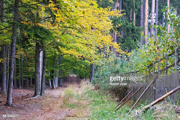 footpath in autumn coloured deciduous forest - laubbaum stock-fotos und bilder