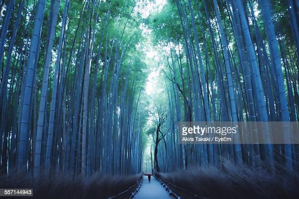 Footpath In Bamboo Grove