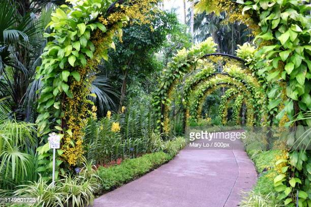 footpath in botanical garden - botanical garden stock pictures, royalty-free photos & images