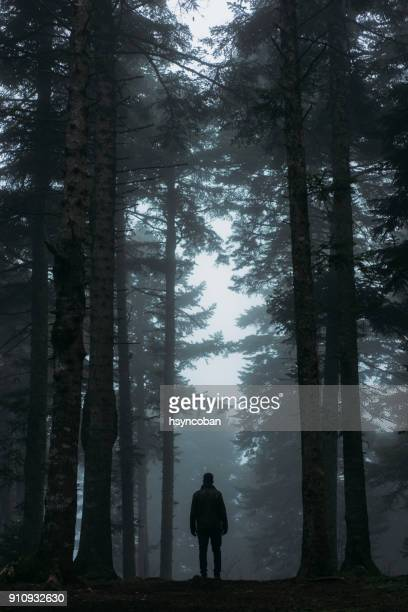 footpath in dark and misty autumn forest - woodland stock pictures, royalty-free photos & images