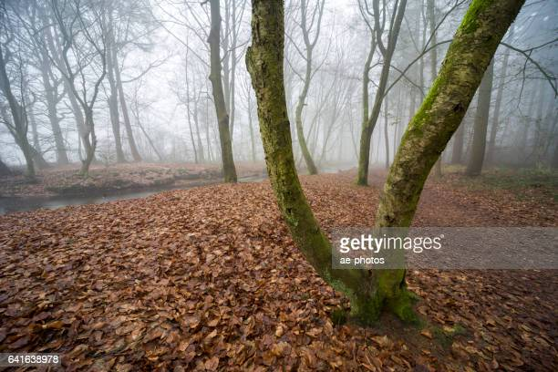 Wanderweg im nebligen Winterwald