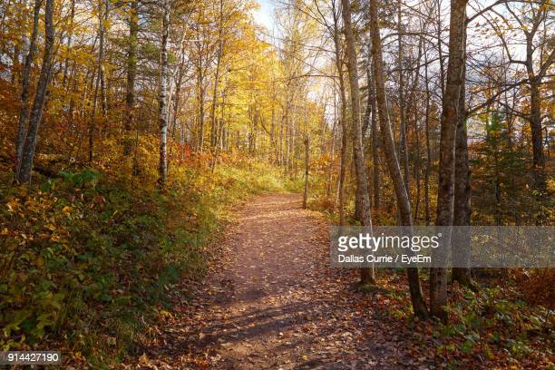 Footpath In Forest During Autumn