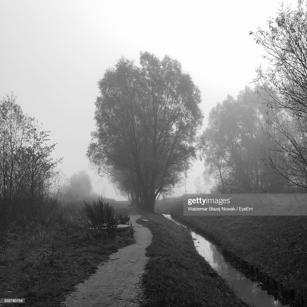 Footpath In Forest : Foto stock