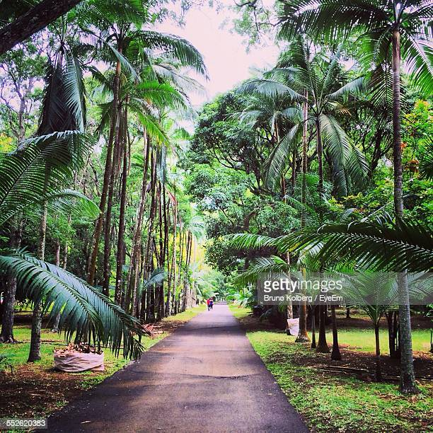 footpath in forest - port louis stock photos and pictures