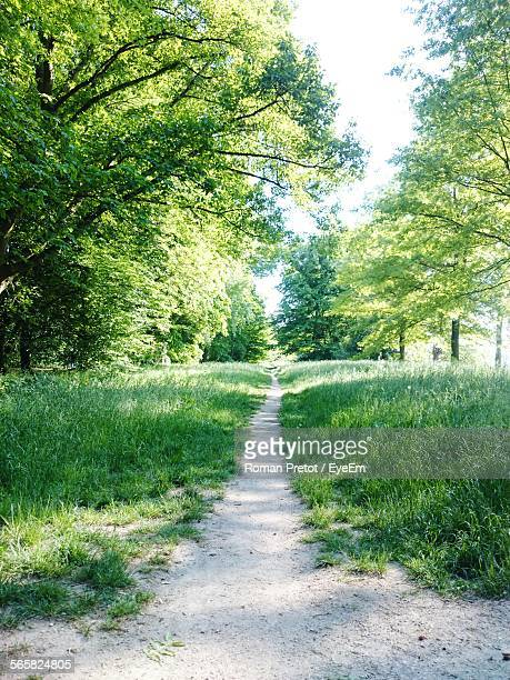 footpath in grass - roman pretot stock-fotos und bilder
