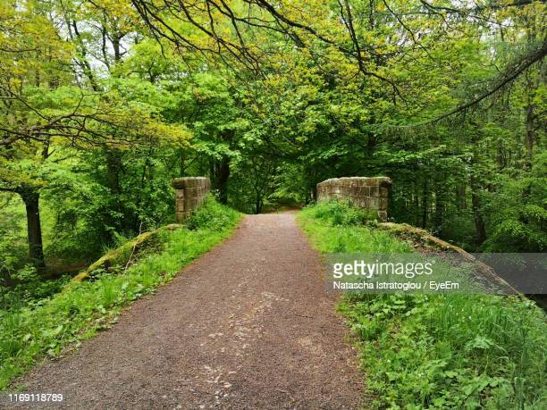 footpath in park - newcastle upon tyne stock pictures, royalty-free photos & images