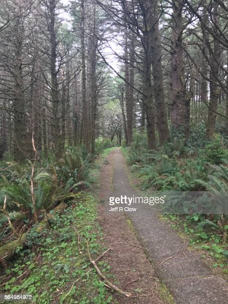 Footpath in the Forest 2