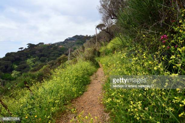 Footpath in the lush Mediterranean vegetation