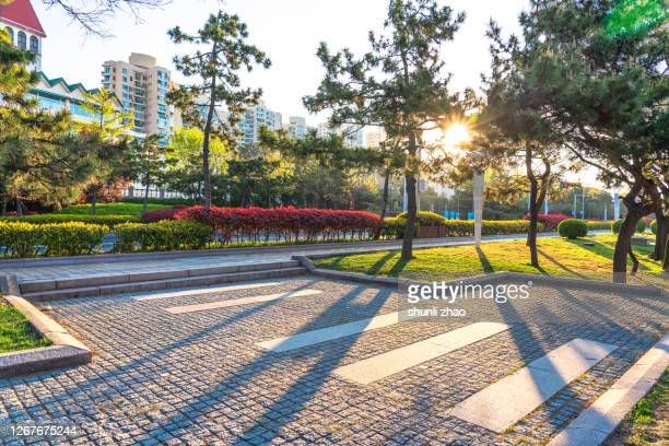 footpath in the park - pavement stock pictures, royalty-free photos & images
