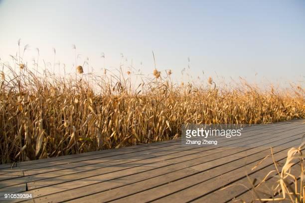 Footpath in wetland