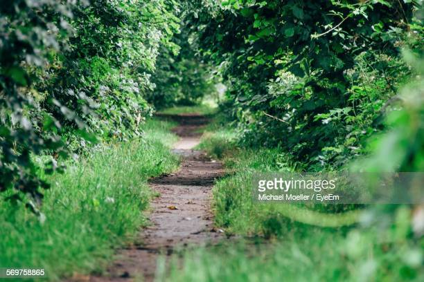 footpath leading towards green forest - focus on background ストックフォトと画像