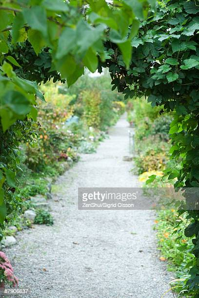 Footpath lined with lush foliage