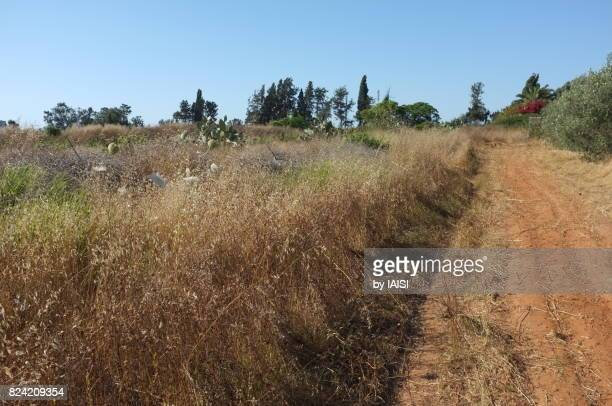 a footpath on lhe lands of kibbutz glil yam - 1943 stock pictures, royalty-free photos & images