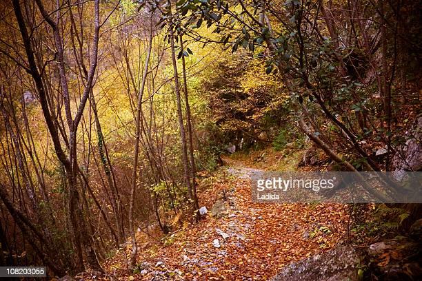Gehweg auf Olympus mountain trail E4