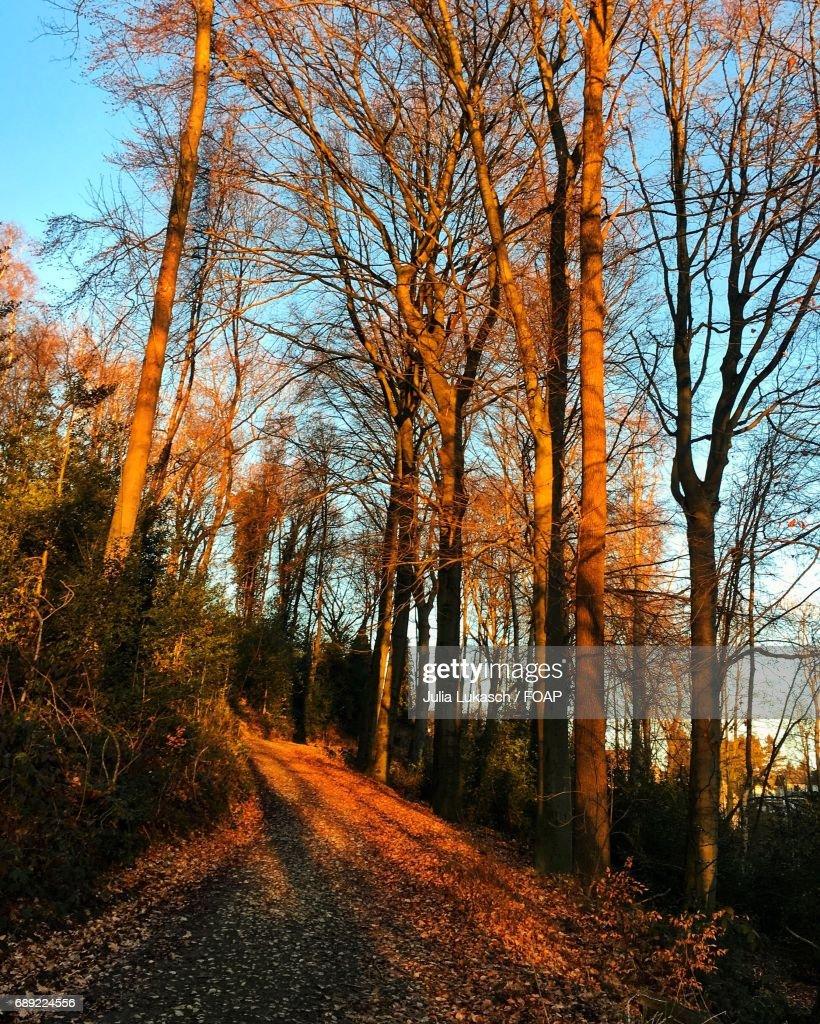 Footpath passing through autumn trees : Stock Photo
