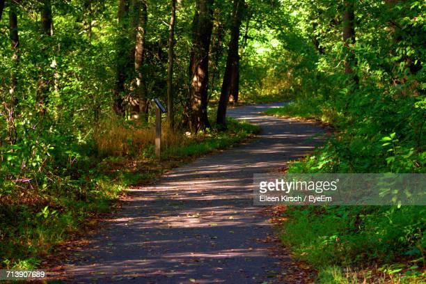 footpath passing through forest - eileen kirsch stock pictures, royalty-free photos & images