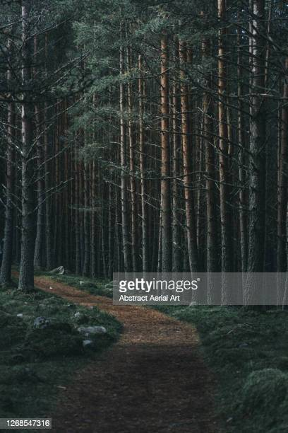 footpath through a forest in cairngorms national park, scotland, united kingdom - grampian scotland stock pictures, royalty-free photos & images