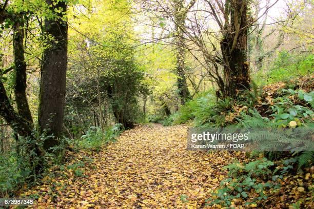 Footpath through autumn forest