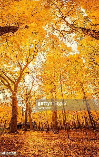 Footpath through forest, Illinois, America, USA