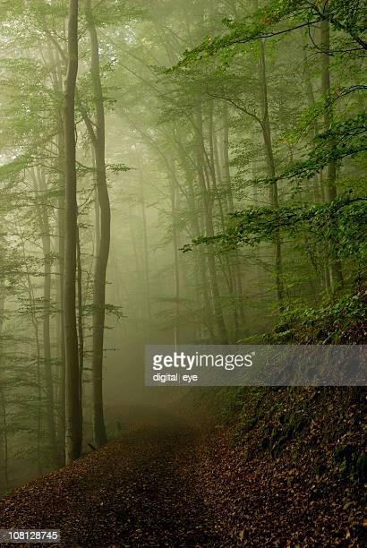 Footpath through Forest in Morning Fog