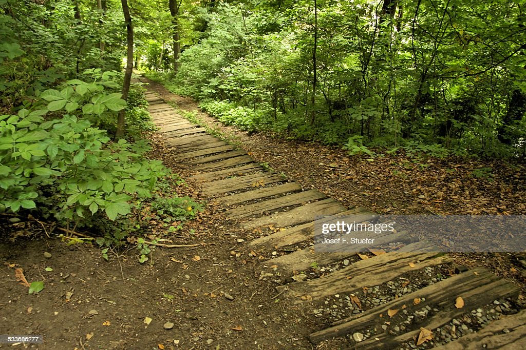 Footpath through forest : Foto stock