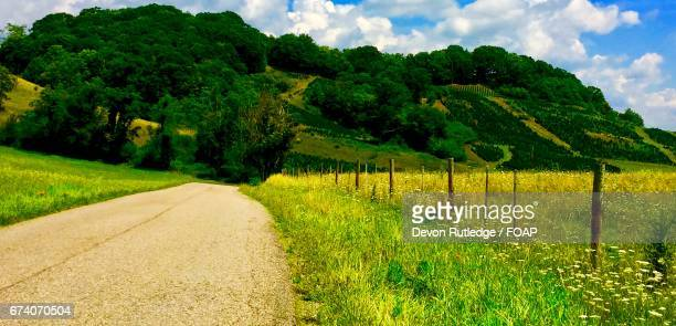 footpath through grassy field - coltsfoot stock photos and pictures